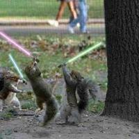 Jedi.squirrels